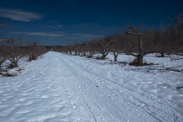 Tracks in the orchard